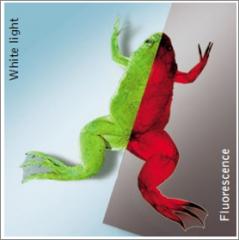 Vector de expresión de proteínas fluorescentes básicas Evrogen (TagFP)